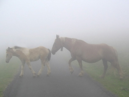 lovak-a-kodben